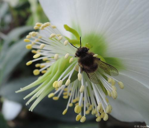 BieneAusschnitt-