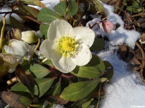 Kasten Schnee 3-06 (1)