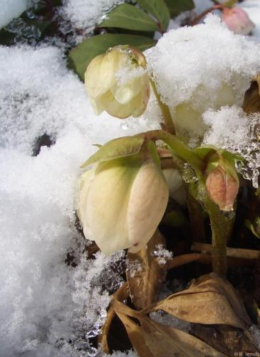Kasten Schnee 3-06 (28)