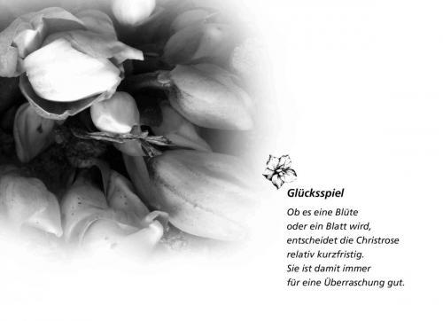 k Adventskalender_29