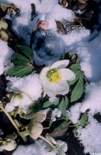 vom Dia - Chrosen im Schnee 06 (6) (1)